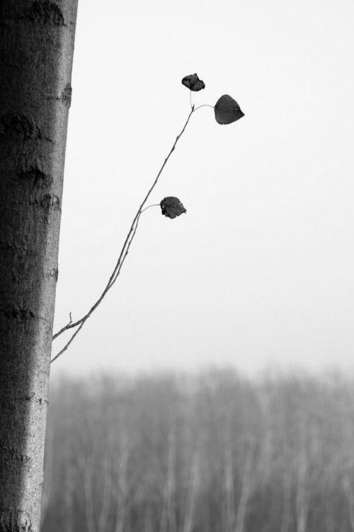 Fotografia di Cristina Finotto